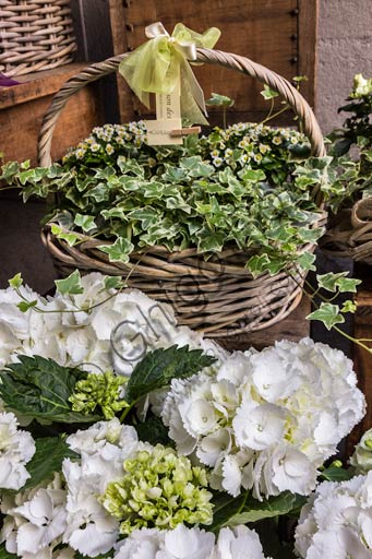 Plant baskets with white flowers.