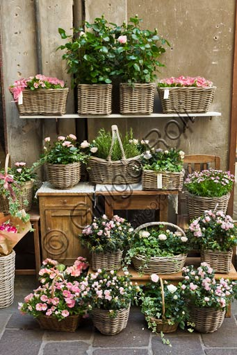 Plant baskets with pink flowers.