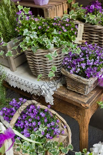 Plant baskets with violet flowers.