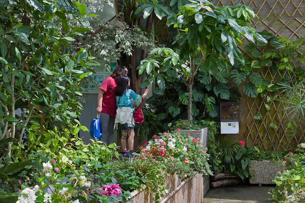 Collodi, Villa Garzoni, Casa delle Farfalle: visitatori (mamma con bambina) osservano le farfalle.