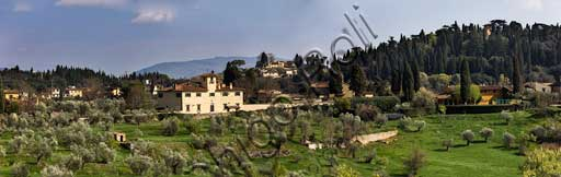 Firenze: gli uliveti di Villa San Leonardo, visti dal Giardino del Cavaliere (Giardini di Boboli).