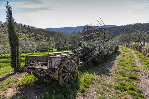 Gaiole in Chianti, Castello di Ama (Ama Castle): view of the surrounding countryside with olive trees, cart and rosemary plants.