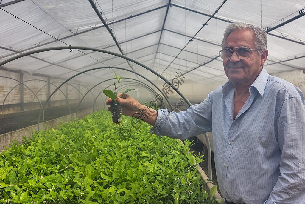 Hesperidarium, Il Giardino degli Agrumi Oscar Tintori: Giorgio Tintori mostra le piantine che stanno crescendo dagli innesti creati un mese prima.