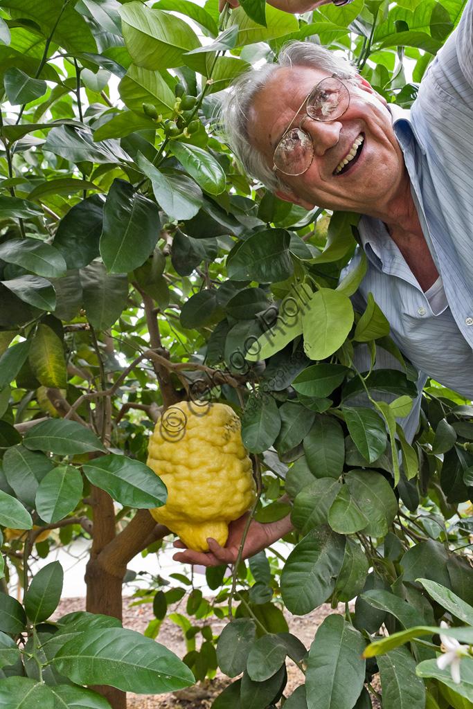 Hesperidarium, Il Giardino degli Agrumi Oscar Tintori: Giorgio Tintori tra le sue piante di limoni ornamentali.