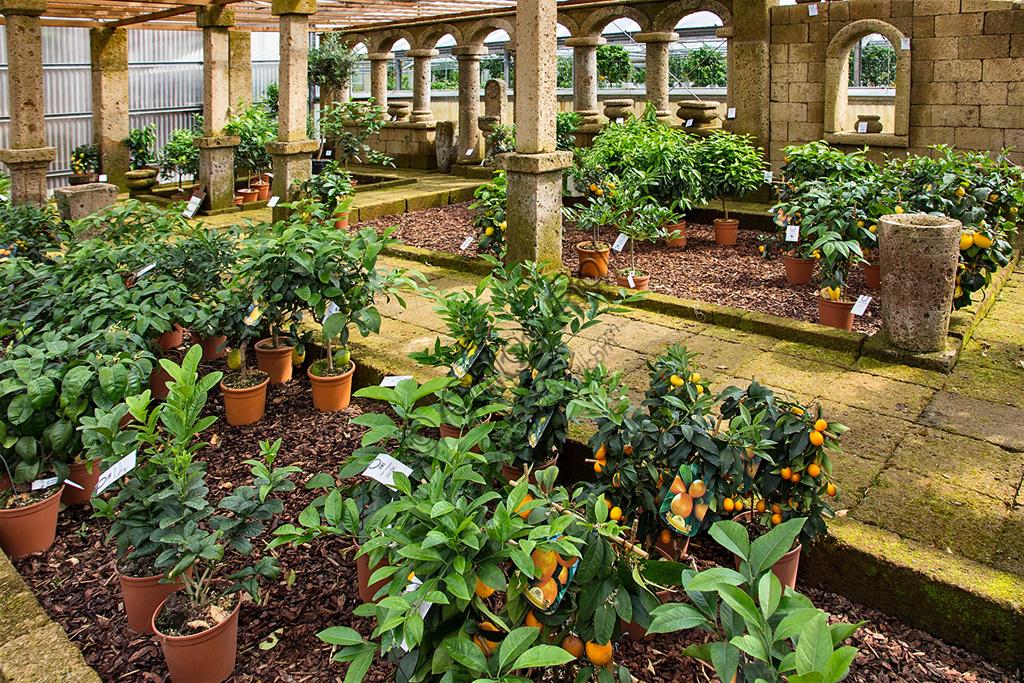 Hesperidarium, Il Giardino degli Agrumi Oscar Tintori: la serra con le piante in vendita.