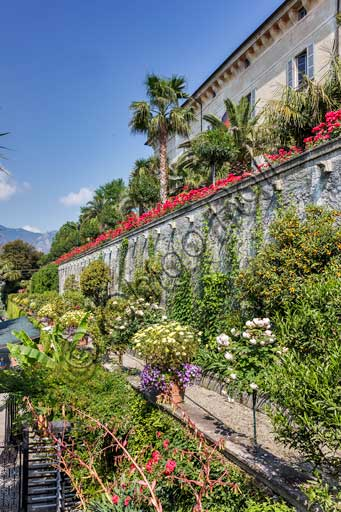 Isola Madre, the Borromeo Palace: partial view of the garden with roses.