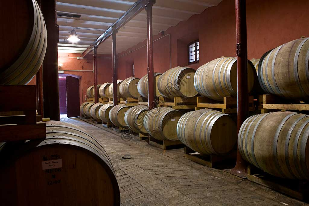 Winery Scacciadiavoli (in Cantinone locality): the barrels of Sagrantino wine.
