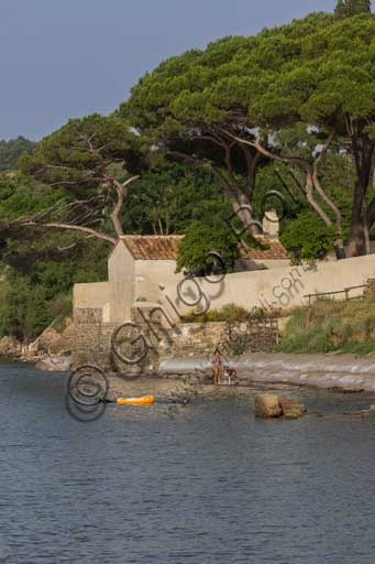 The Baratti Gulf: the Church of St. Cerbone, on the seafront, surrounded by stone pines (Pinus pinea).