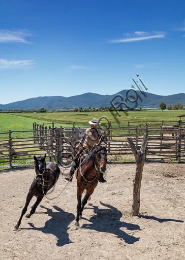"""Parco Regionale della Maremma: buttero che doma un puledro con il proprio cavallo che è detto """"marrone""""."""