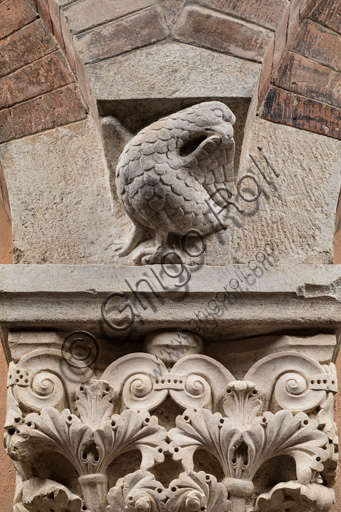 Modena, Ghirlandina Tower, Torresani Hall, south wall: Corinthian capital with a sculpted bird in the abacus protome. Campionese Masters, XII - XIII century. Detail.