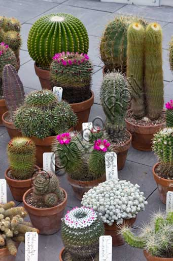 Padova, the Botanical Garden, the Garden of Biodiversity, interior of the big greenhouse: a collection of succulent plants.
