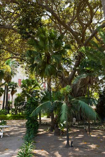 Palermo, The Royal Palace or Palazzo dei Normanni (Palace of the Normans), the South West side, the gardens of the St. Peter Bastion: trees and a palm tree.