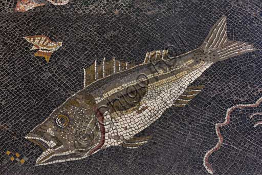 Piombino Archaelogical Museum, mosaic depicting a marine scene with fish, crustaceans, shells, octopus (II century b.C.) and a shipwreck found in the Logge area in the archeological site of Populonia: detail with fish and shell.