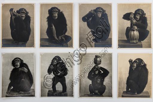 """""""Pierrette, the chimpanzee-mascot belonging to Gea della Garisenda"""", bromide silver gelatine by Marcello Dudovich,  1910."""