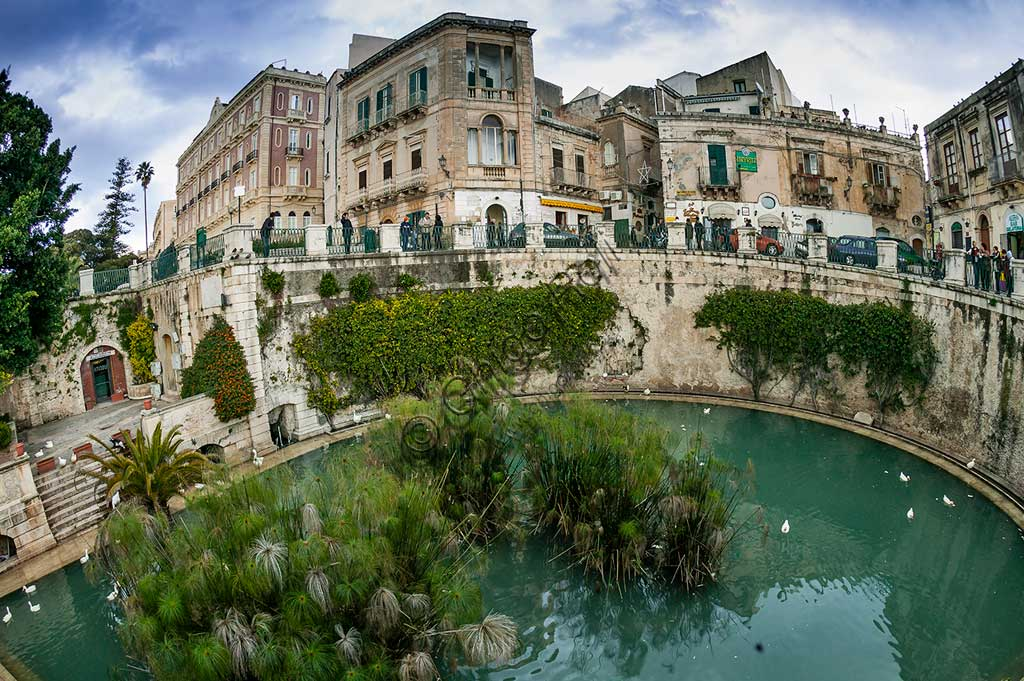 Syracuse: view of Aretusa  Spring on the island of Ortigia, with the famous papyrus plants.