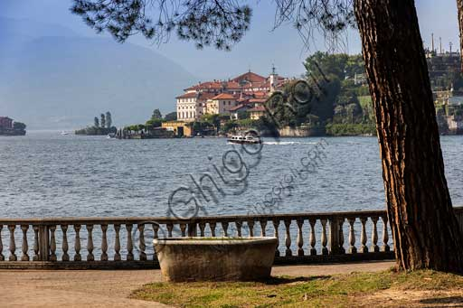 Stresa: the lakefront and a tree. In the background, Isola Bella.