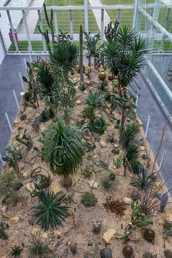 Padova, the Botanical Garden, the Garden of Biodiversity, interior of the big greenhouse: a detail of one of the biomes (arid zone).