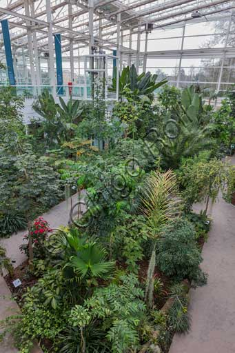 Padova, the Botanical Garden, the Garden of Biodiversity, interior of the big greenhouse: a detail of one of the biomes.