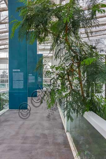 Padova, l'Orto Botanico, il Giardino della Biodiversità, interno della grande serra: particolare di uno dei diversi bioma.