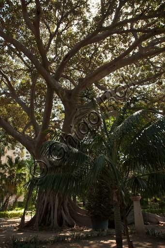 Palermo, Palazzo Reale o Palazzo dei Normanni, lato sud ovest, i giardini del Bastione di San Pietro: alberi tra cui una palma.