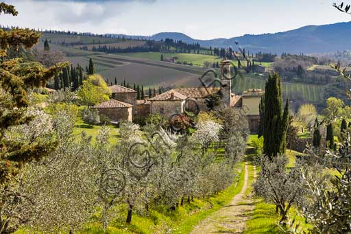 Radda in Chianti: Pieve (Romanesque Church) of Santa Maria Novella and fruit trees in blossom.