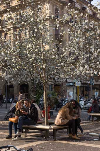 Padua, historic town centre: people sitting on a bench under a blossomed tree.