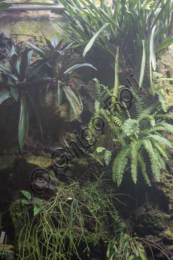Padova, the Botanical Garden: plants  in the tropical greenhouse.