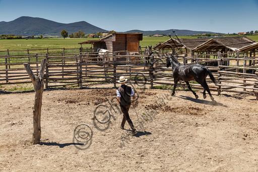 Parco Regionale della Maremma: buttero in un tondino che addestra il proprio cavallo.